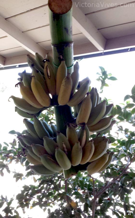 Ice Cream Bananas
